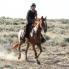 Dorsey Creek Endurance Ride 2012